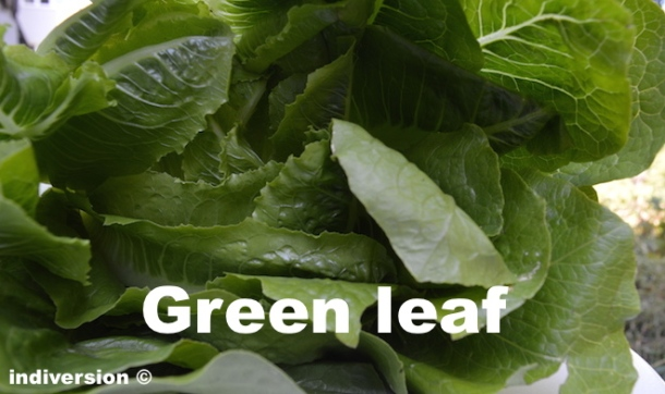 green-leave